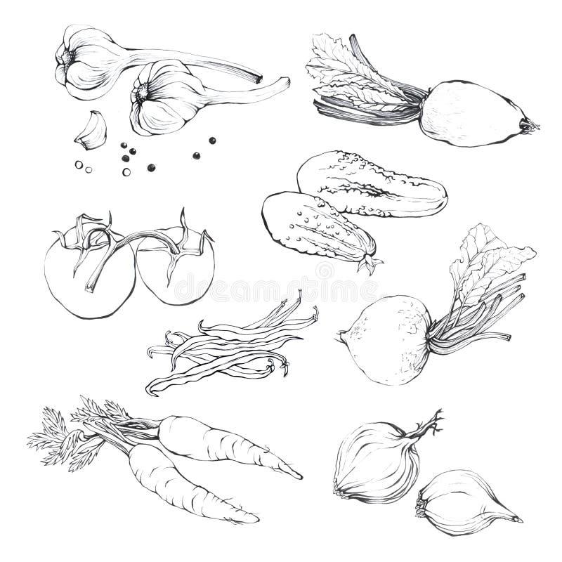 Ustawia, kolekcja różnorodna ręka rysujący warzywa royalty ilustracja