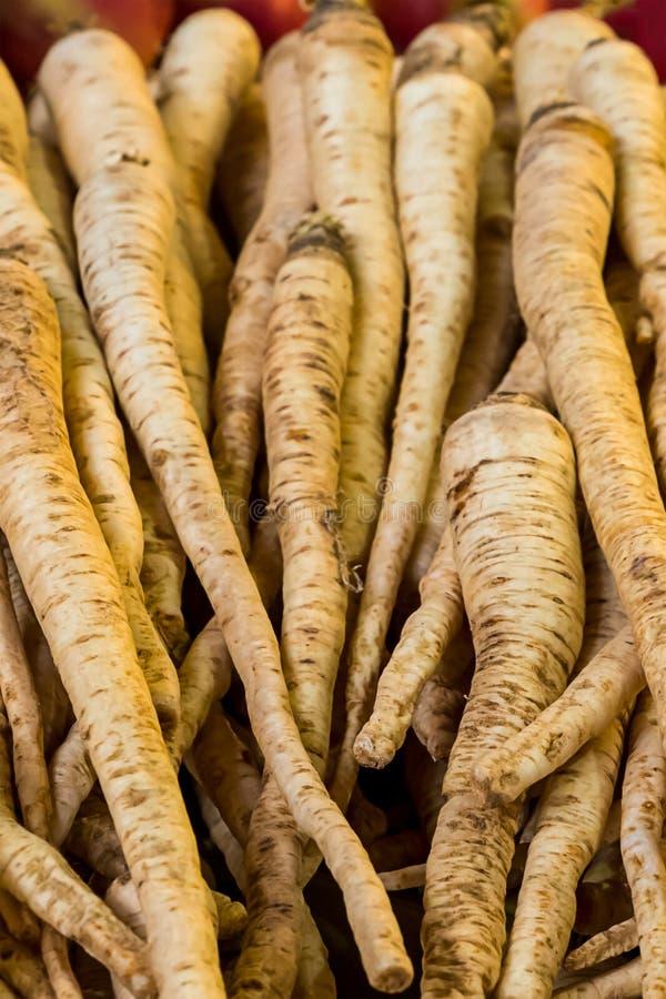Ustawia mnóstwo korzeń pionowo pietruszki owoc długą bazę sałatkowy puree ostrzenie i pikantności zakończenie obraz stock