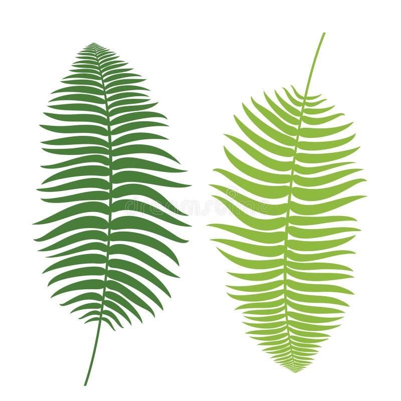 Ustawia paprocie Rocznik wektorowa botaniczna ilustracja ilustracji