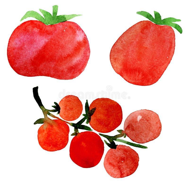 ustawia pomidoru ilustracji