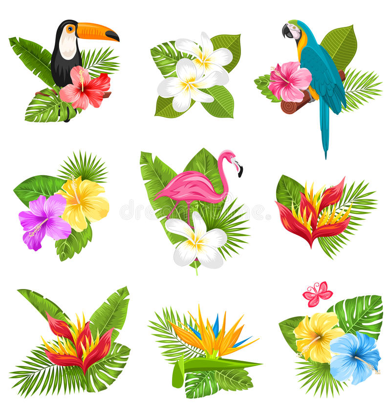 Ustawia skład z Tropikalnymi kwiatami, Egzotycznym ptakiem i roślinami, ilustracja wektor