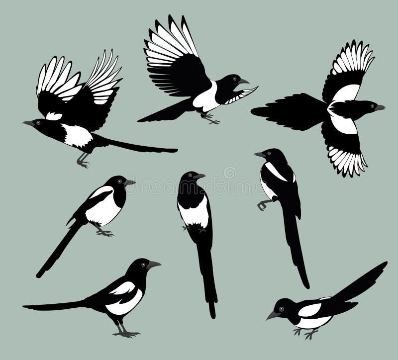 Ustawia sroka ptaki ilustracji