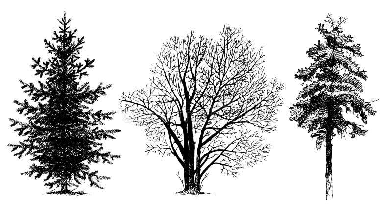 ustawia sylwetki drzewne royalty ilustracja