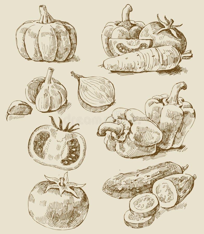 ustawia warzywa ilustracji
