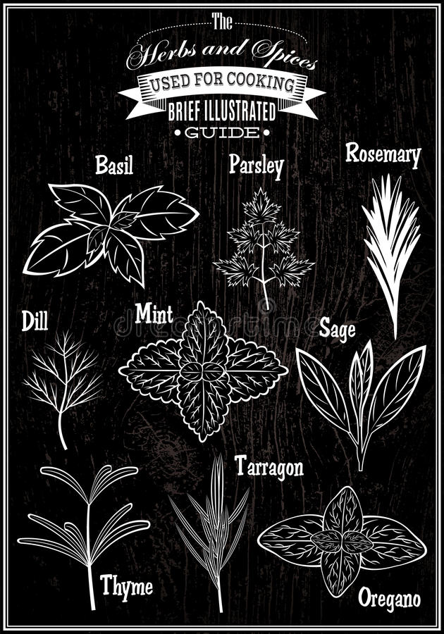 Ustawia wektorowych wizerunek rośliny ziele dla gotować ilustracja wektor