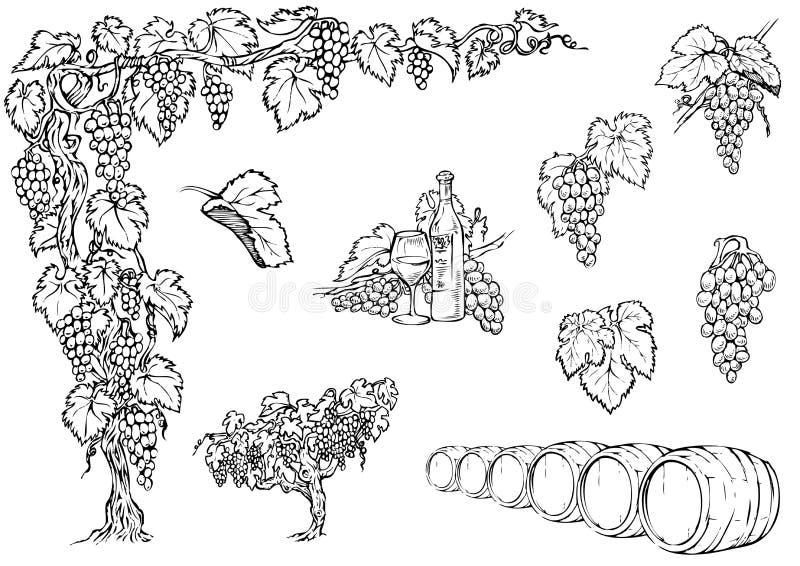 Ustawia winogradu ilustracja wektor