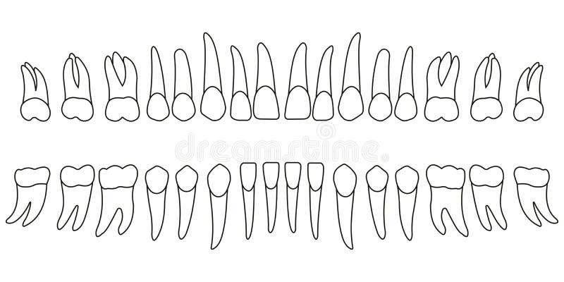 ustawia zęby ilustracja wektor