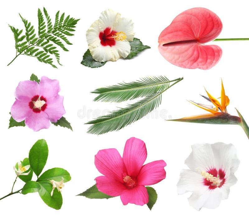 Ustawia z pięknymi tropikalnymi kwiatami i zieleń liśćmi zdjęcia stock