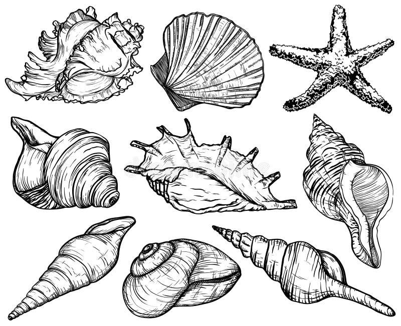 Ustawia z seashells i rozgwiazdą, denna mollusk kolekcja ilustracja wektor