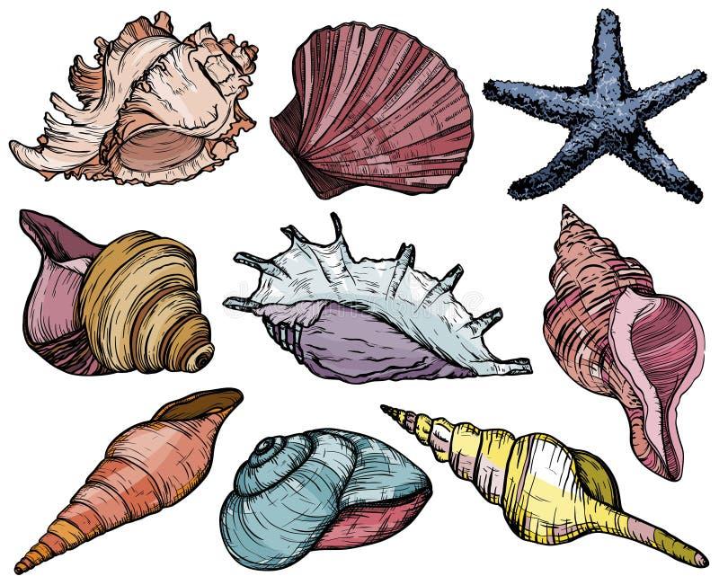 Ustawia z seashells, rozgwiazda, denny mollusk i ryba, royalty ilustracja