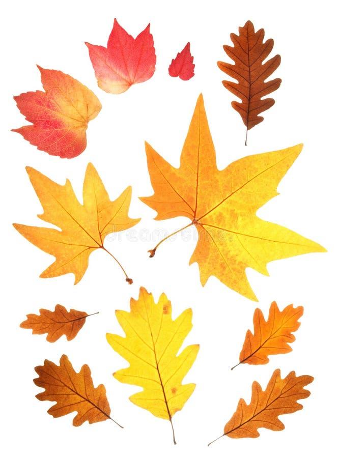 ustawiający jesień liść fotografia stock