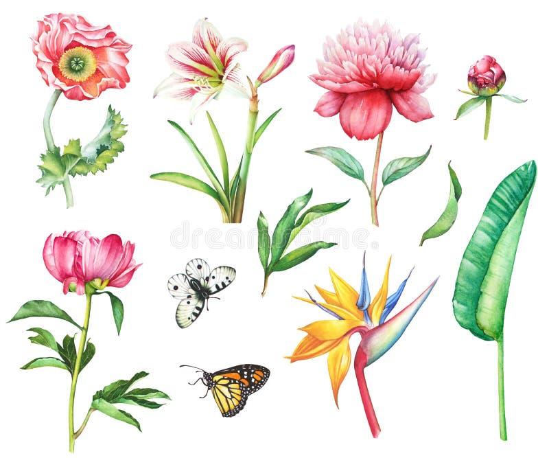 ustawiający motyli kwiaty royalty ilustracja