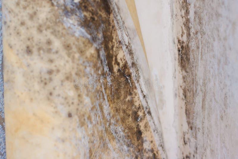 Uszkodzenie wody powodujÄ…ce wzrost pleÅ›ni na wewnÄ™trznych Å›cianach nieruchomoÅ›ci obrazy stock