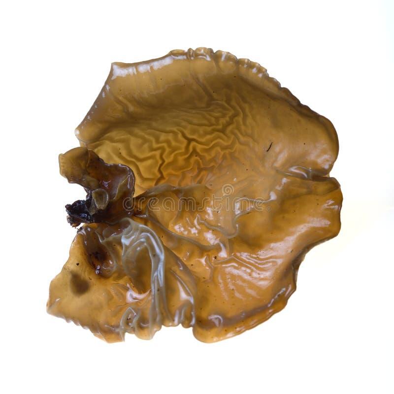 uszy drewna pieczarkowy zdjęcia stock
