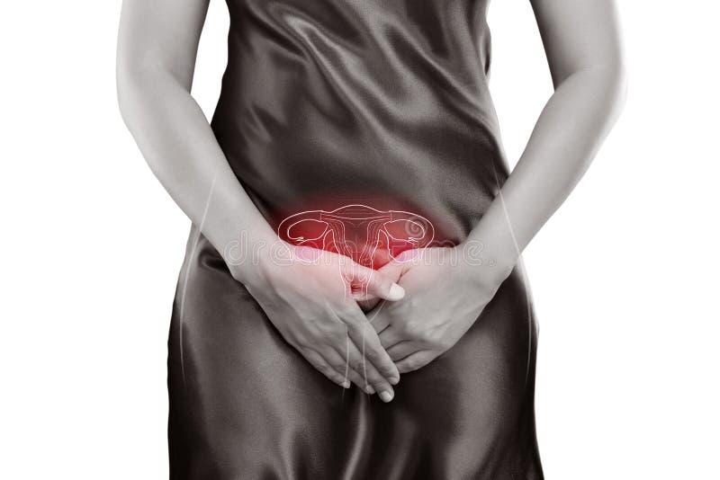utérus illustration libre de droits