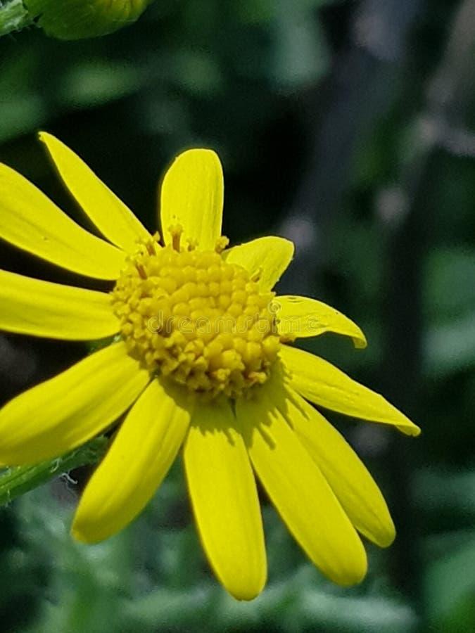 Utöver det vanliga blomma i solljus arkivfoto