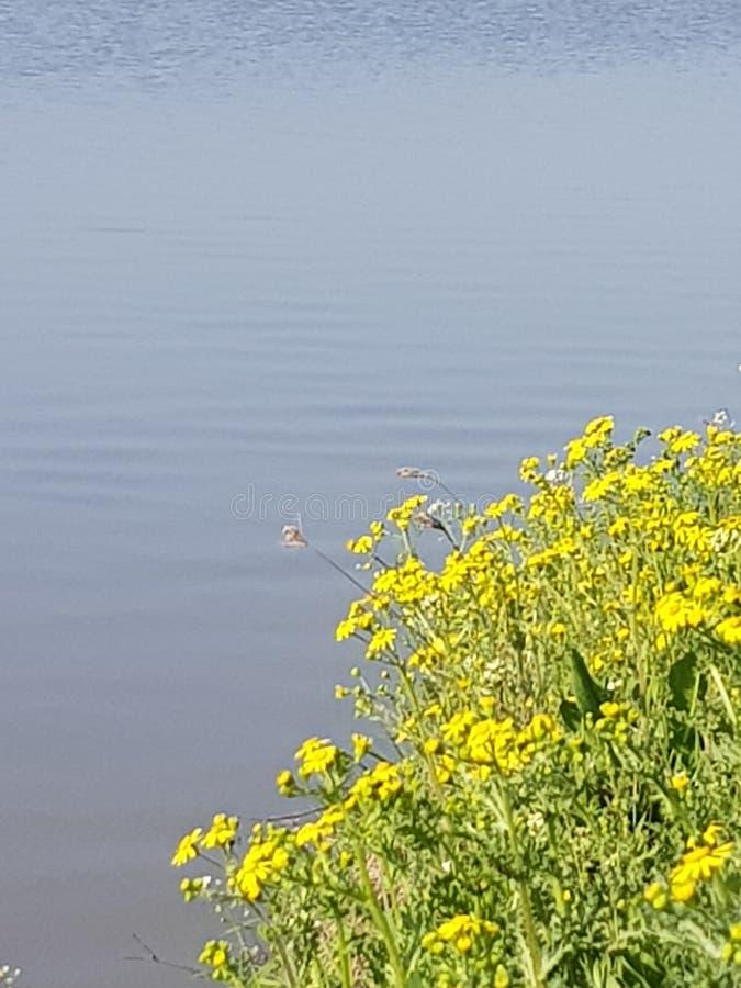 Utöver det vanliga blomma i solljus fotografering för bildbyråer
