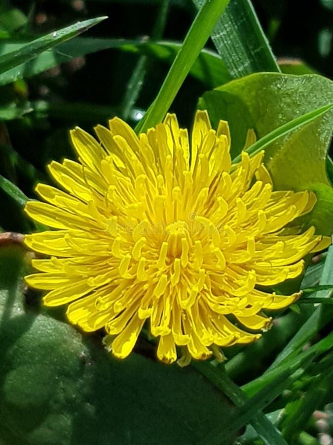 Utöver det vanliga blomma i solljus royaltyfri foto