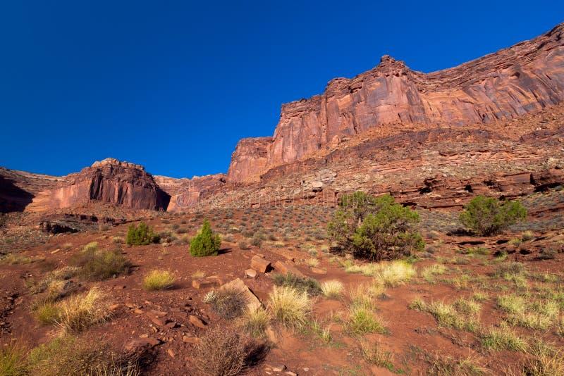 Download Utah-Canyonlands National Park- White Rim Road Stock Photo - Image of canyons, cactus: 20167276