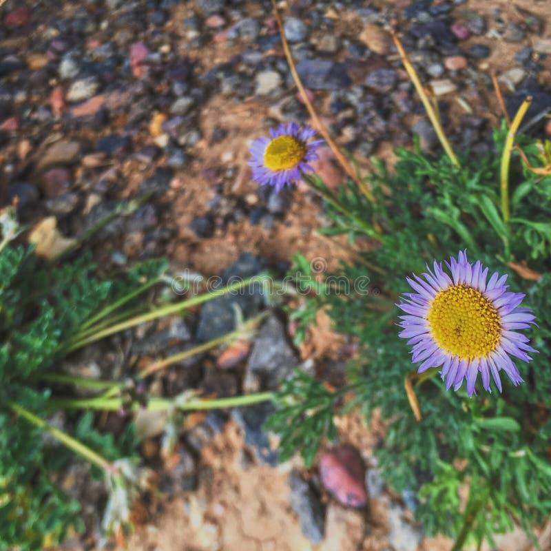 Utah, Cedar Bricks National Park royalty free stock photo