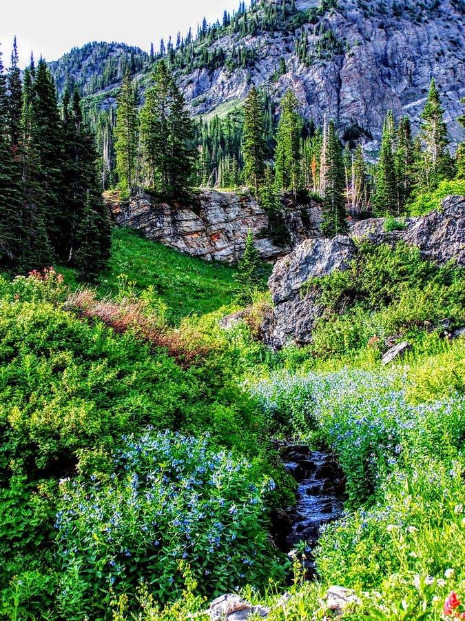 Utah kanjon som fotvandrar slingan in mot de Wasatch bergen arkivfoton