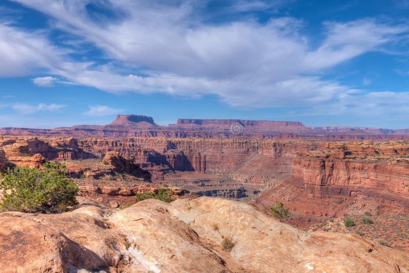 Utah Krajowe igły Gromadzkie obrazy royalty free