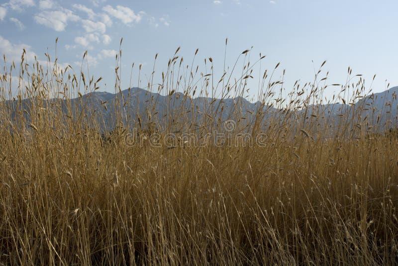 Utah-Landschaft mit hohe Gras-Gebirgsblauen Himmeln und geschwollenen Wolken stockfotos