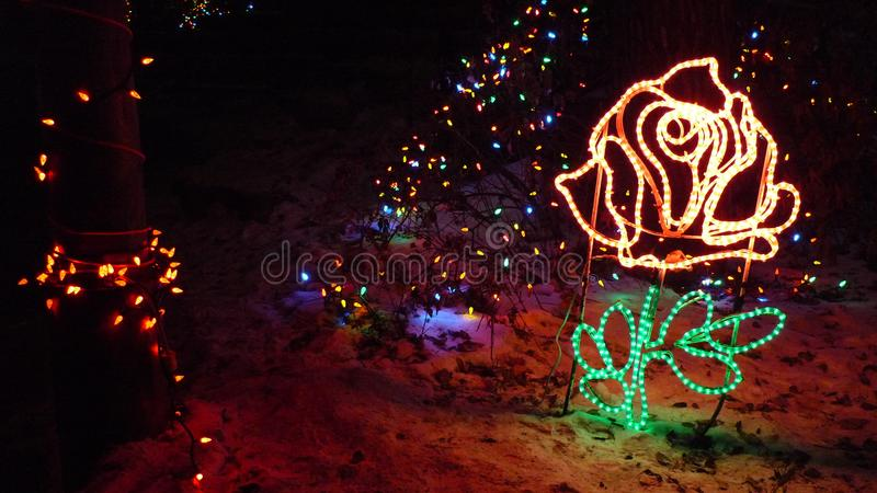 Utarbetade Rose Christmas Lights royaltyfri bild