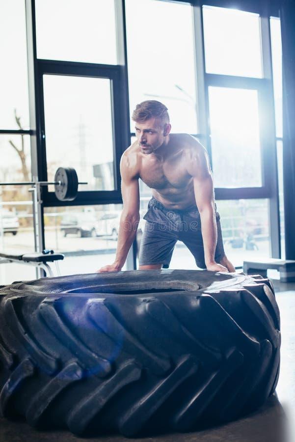 utarbetande och lyftande gummihjul för stilig shirtless idrottsman royaltyfri fotografi