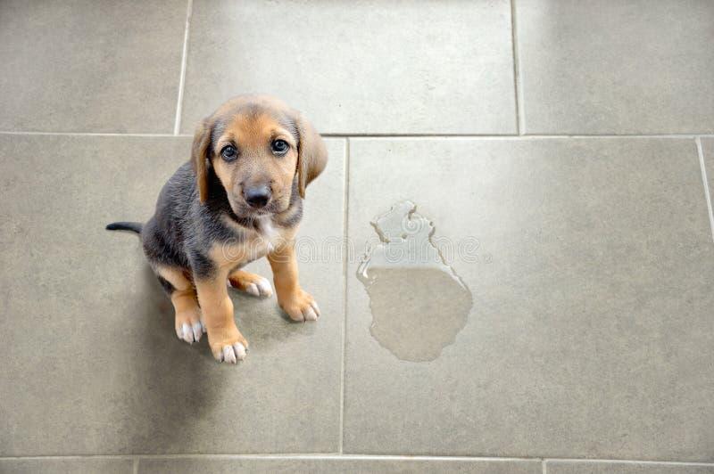 Utbilda ditt husdjur royaltyfria bilder