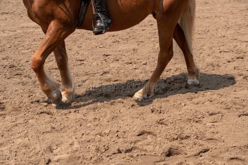 utbildande delar för en häst av klöven på jordningen royaltyfria foton