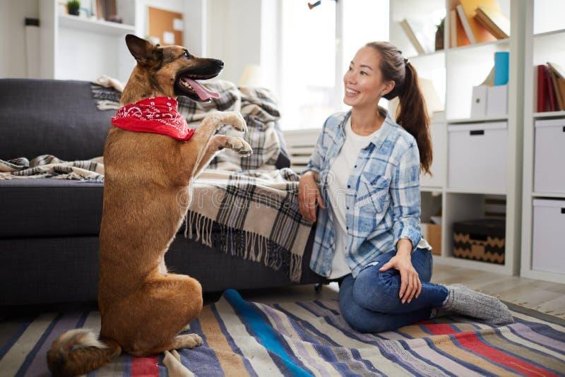 Utbildande hund hemma arkivfoton