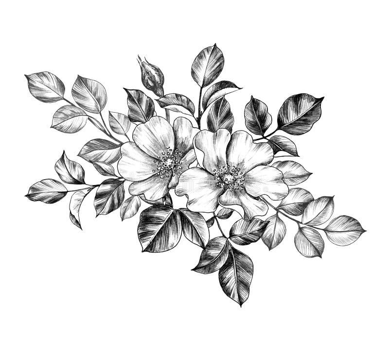 Utdragen hund Rose Flowers för hand vektor illustrationer