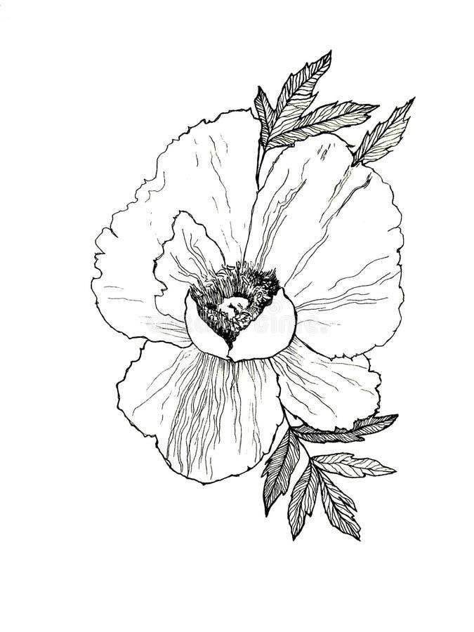 Utdragen illustration för hand av pionen arkivbild