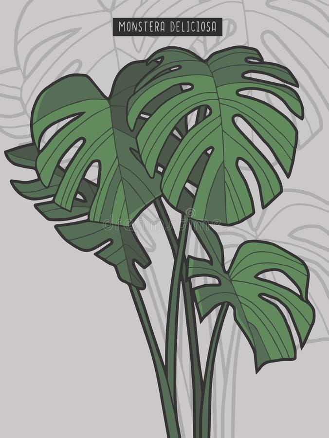 Utdragen illustration för vektor för Monstera Deliciosa tropisk windowleafväxt stock illustrationer