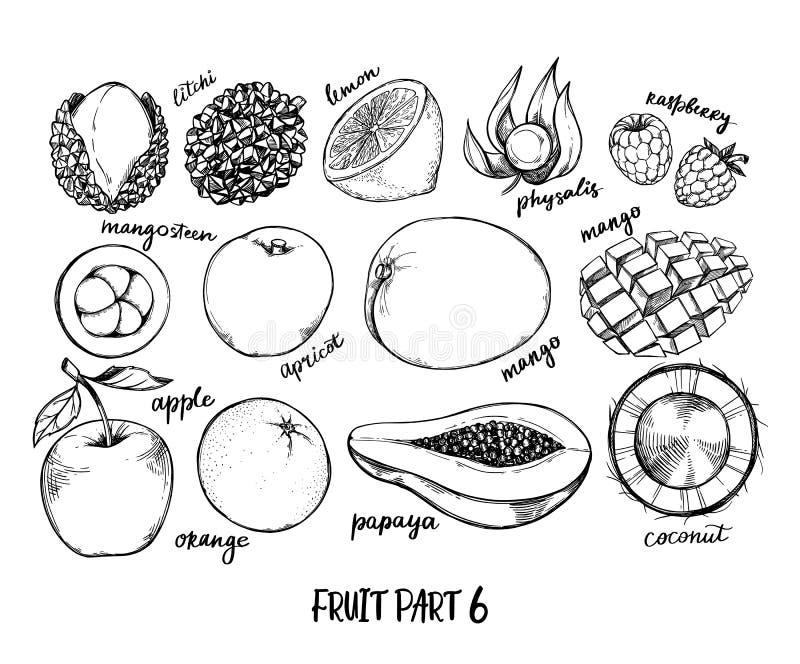 Utdragen vektorillustration f?r hand - samling av tropiska och exotiska frukter Sunda matbest?ndsdelar Apple apelsin, papaya, kok vektor illustrationer