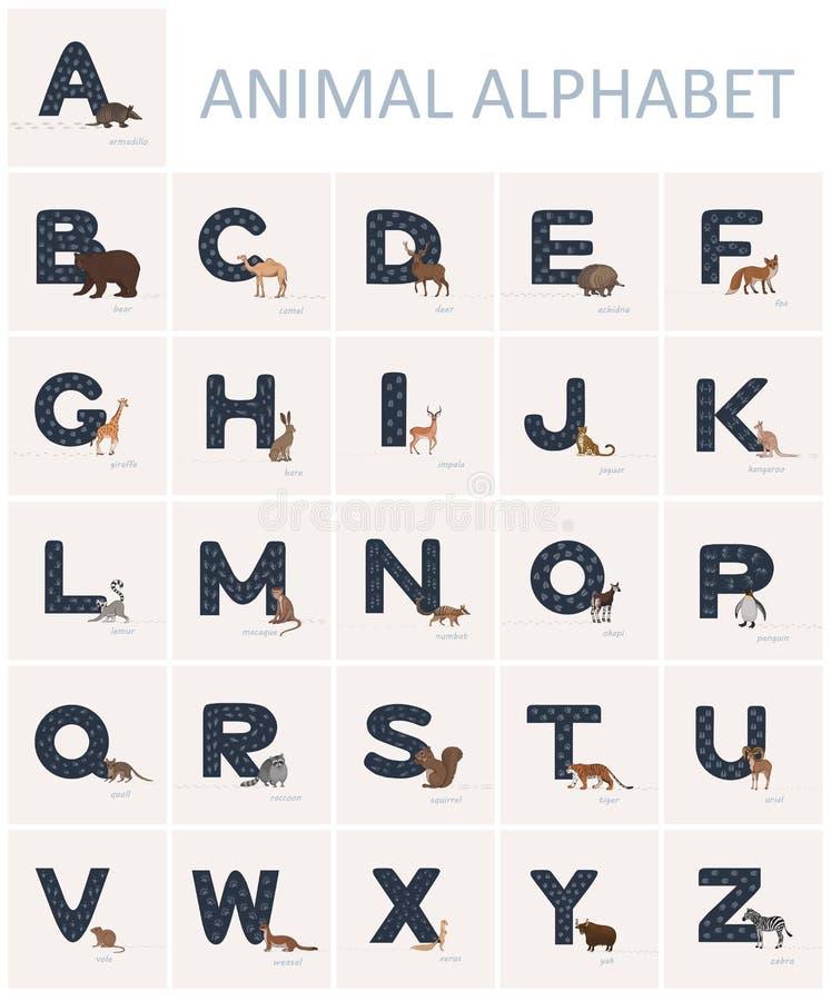 Utdraget blått engelskt alfabet för hand med djura spår på det och djur i närliggande tecknad filmstil vektor illustrationer