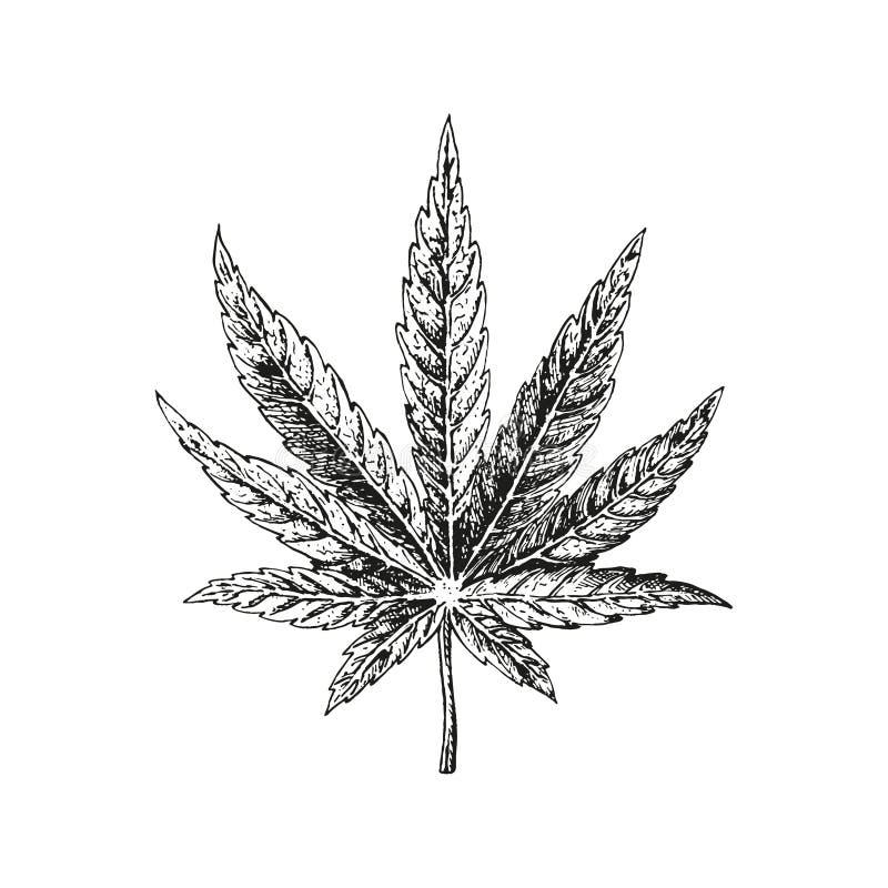 Utdraget hampablad för hand Cannabisväxt Vektorn skissar av marijuana vektor illustrationer