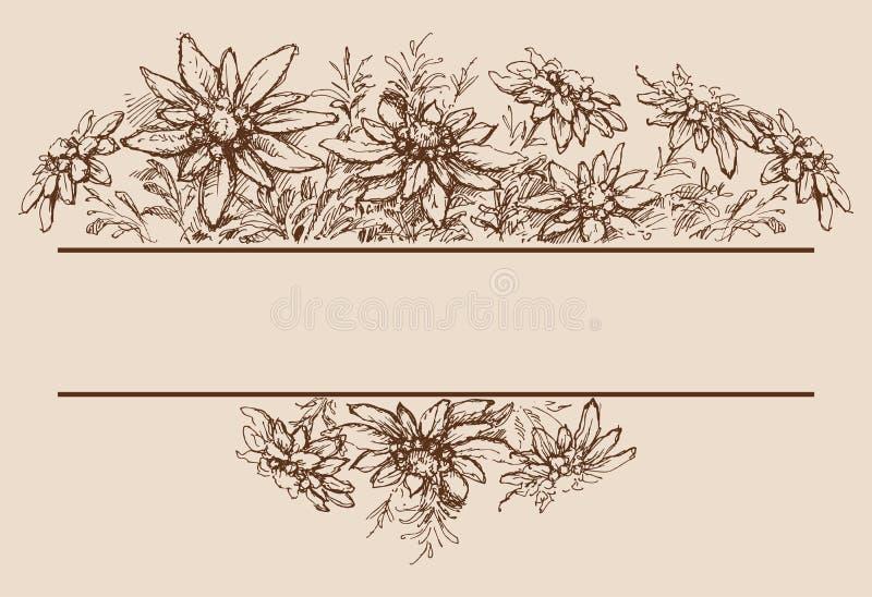 Utdragna gränser för edelweisshand royaltyfri illustrationer