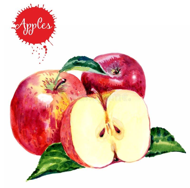 Utdragna röda äpplen för vattenfärghand Isolerad f?r matfrukt f?r eco naturlig illustration p? vit bakgrund sund mat stock illustrationer