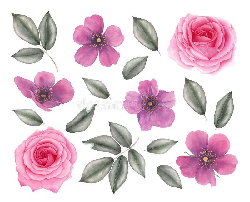 Utdragna realistiska rosa blommor för vattenfärghand vektor illustrationer