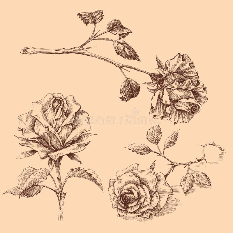 Utdragna rosor uppsättning som för hand isoleras stock illustrationer