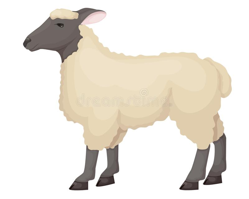 ute roligt traskat husdjur av den horned familjen, RAM vektor illustrationer