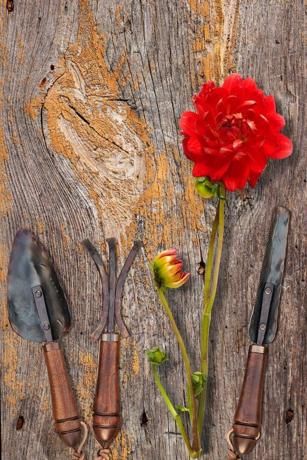 Utensilios de jardinería del vintage foto de archivo libre de regalías