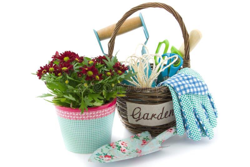 Utensilios de jardinería en una cesta y chrysanths foto de archivo libre de regalías