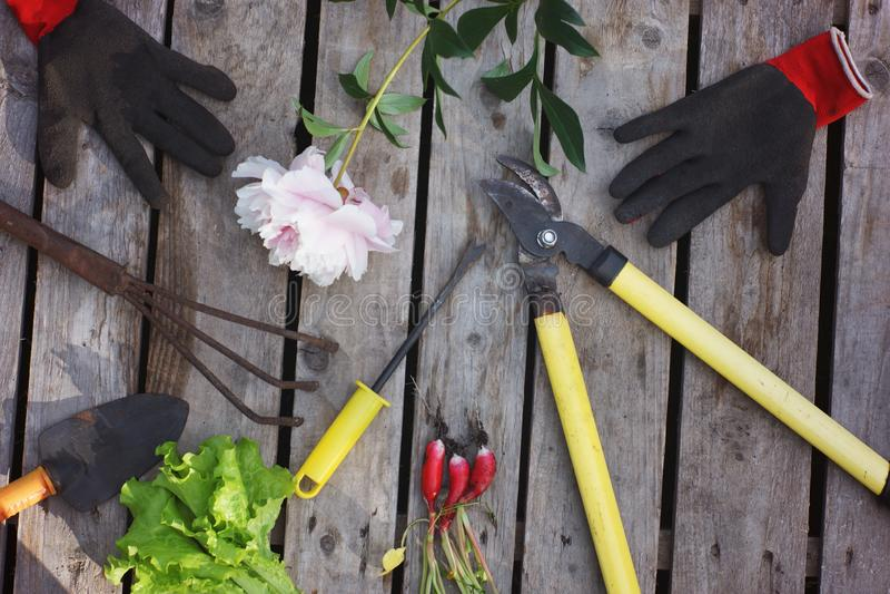 Utensilios de jardinería tales como tijeras de podar, rastrillos, palas y guantes en un fondo de madera al lado de la cosecha del fotografía de archivo libre de regalías