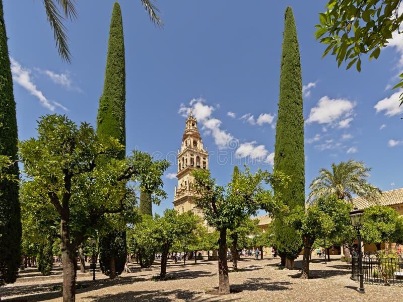 Uteplats med träd och klockatornet av moskédomkyrkan av Cordoba royaltyfria foton