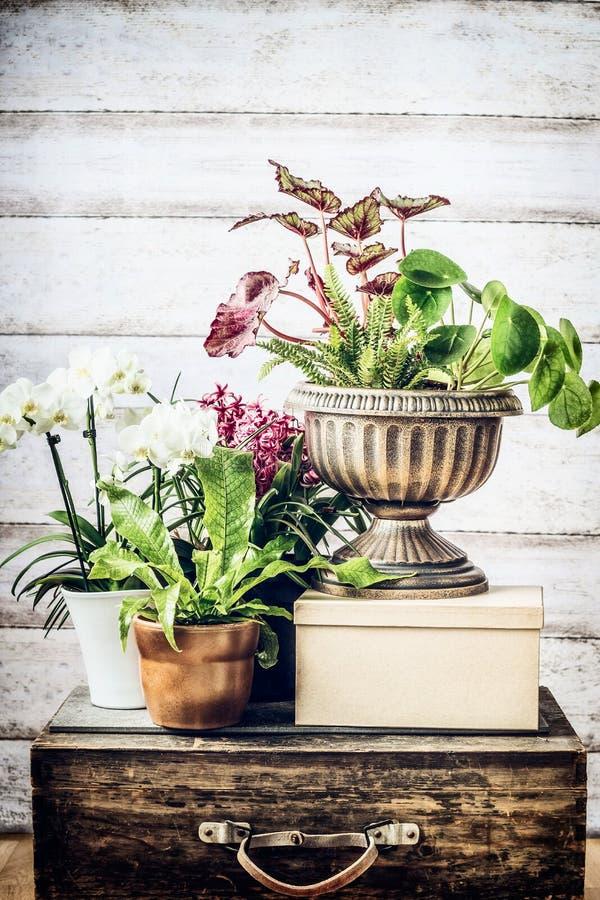 Uteplatsen för inomhus växter lägger in idéer på tappningresväskan på träbakgrund fotografering för bildbyråer
