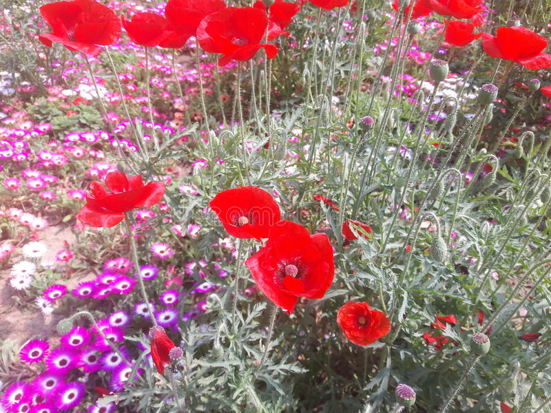 Utformar blom- bakgrund för blomman Garden royaltyfri fotografi
