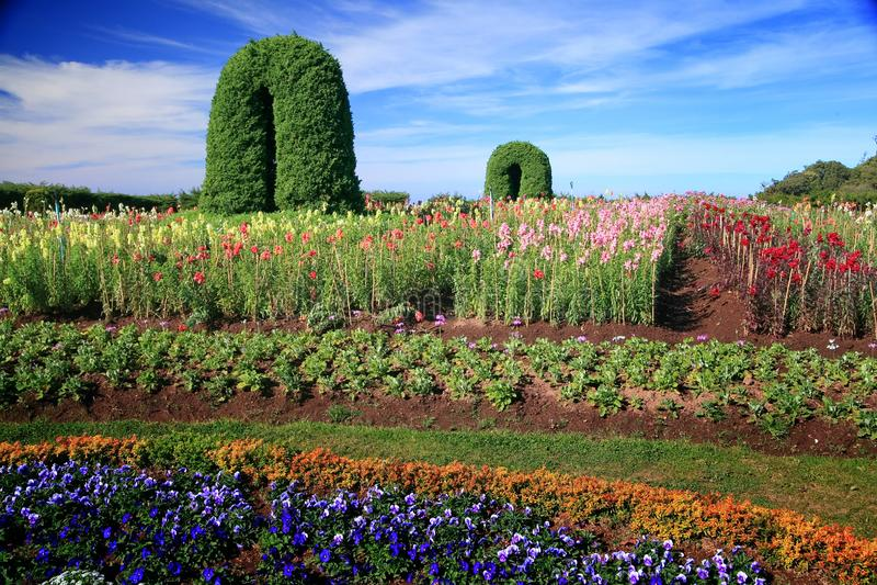 Utformar blom- bakgrund f?r blomman Garden royaltyfri bild